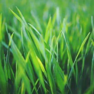 csg_dressing_lawn